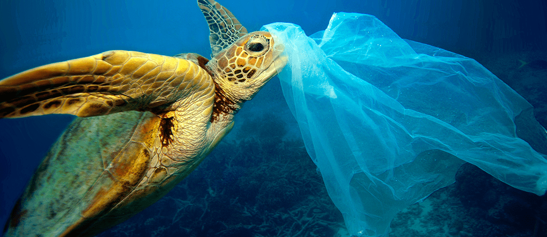 Ocean Plastics